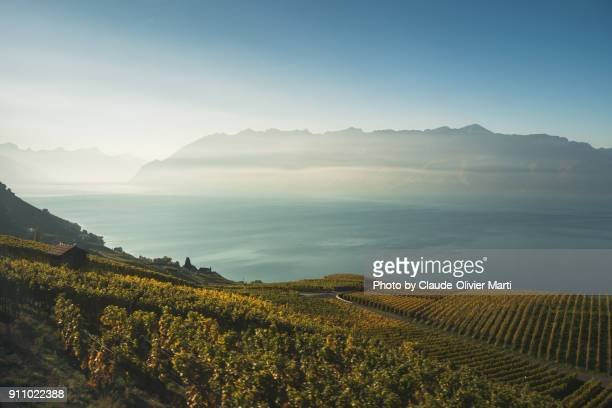 the lavaux, switzerland - vaud canton stock photos and pictures