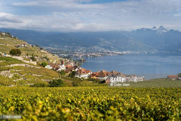the lavaux vineyard by lake geneva near vevey in canton vaud in switzerland - vaud canton stock pictures, royalty-free photos & images