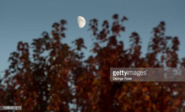The leaves of a Russian River Valley tree begin to turn color on September 21 near Healdburg California A cool spring and mild summer have...
