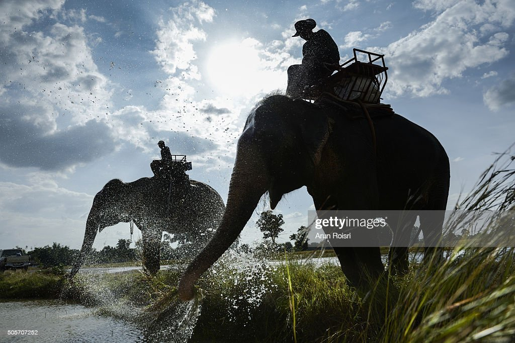 The life of mans and elephants : Stock Photo
