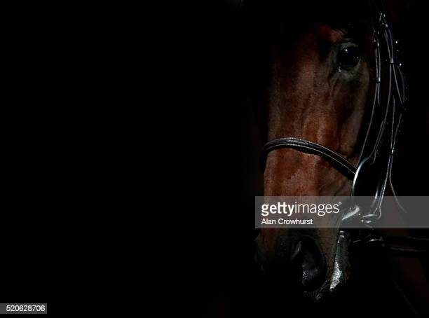 The light catches a side of a runner in the pre parade ring at Newmarket racecourse on April 12 2016 in Newmarket England