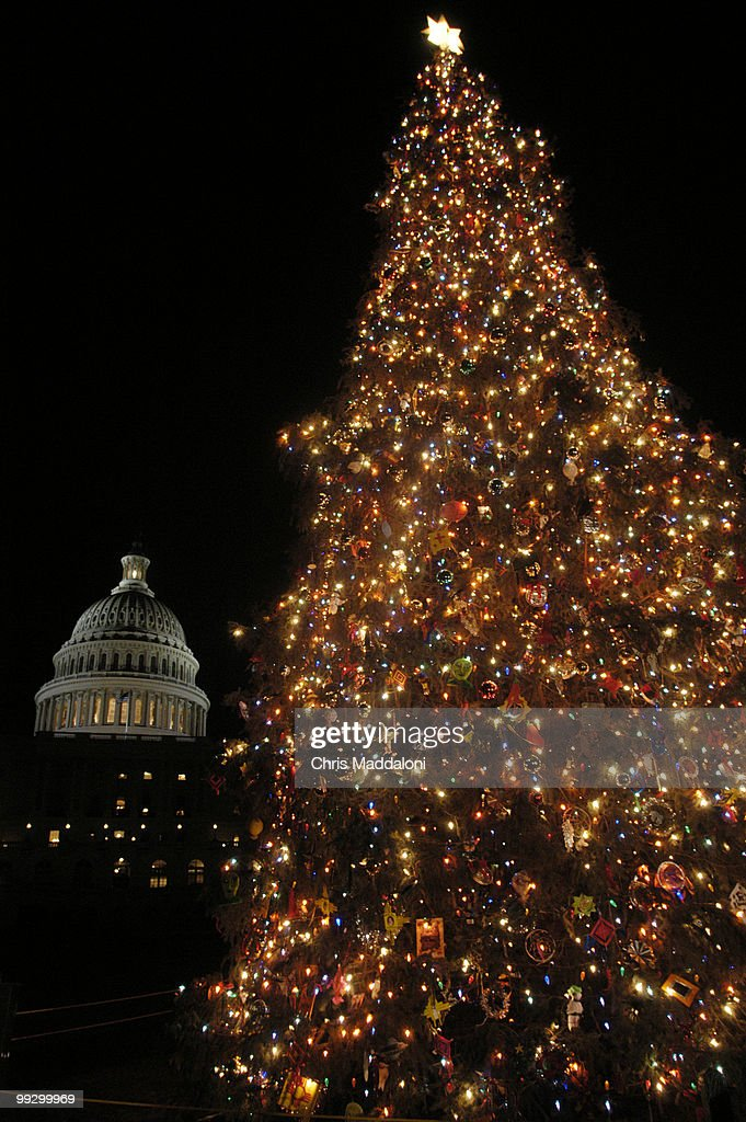 the lighting of the us capitol christmas tree ceremony the 65 ft engelmann spruce - 65ft Christmas Tree