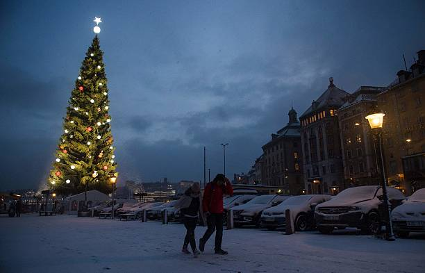 the lights of stockholms biggest christmas tree are switched on for the first time during advent - Biggest Christmas Tree
