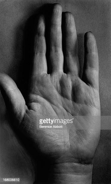 The lines on a human palm 195861