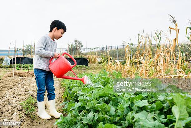 The little boy was watering his farmland
