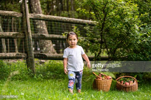 The little girl checking the freshly picked wild edible mushrooms on the grass