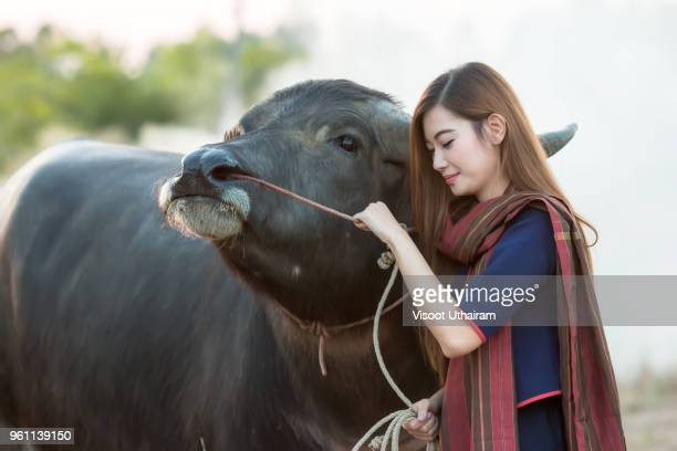 The lives of countryside women in rural area with buffalo.