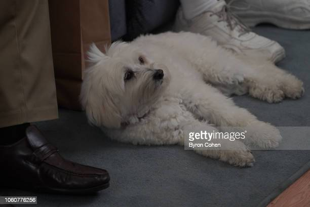 THE GOLDBERGS The Living Room A 100% True Story Barry realizes that as a future doctor he should be more concerned about Murray's health so he...
