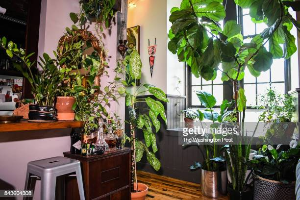 The living room of the home of artist Hilton Carter is seen on Wednesday August 30 in Baltimore MD Carter turned his home into a kind of urban...