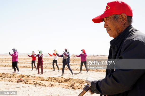 The local farmer dance of openair fitness after planted saxaul in the desert at near the Yangguan protected area on April 22 2019 in Dunhuang Gansu...