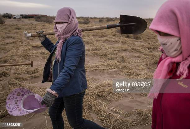 The local women carrying a spade in desert at Mingqin county on March 28th 2019 in Wuwei Gansu Province China In order to prevent desertification...