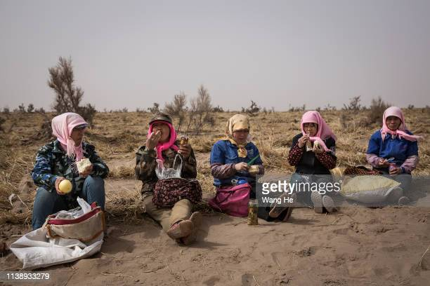 The local women eat lunch after planted saxaul in the desert at Mingqin county on March 27th 2019 in Wuwei Gansu Province China In order to prevent...