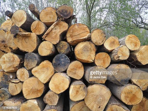 the log pile - heap stock pictures, royalty-free photos & images