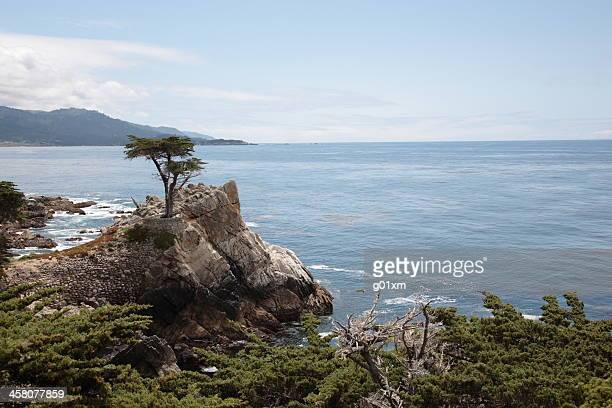 el lone cypress en 17 millas de distancia de big sur - monterrey fotografías e imágenes de stock