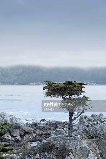 O Cipreste solitário em 17 Mile conduzir na Big Sur