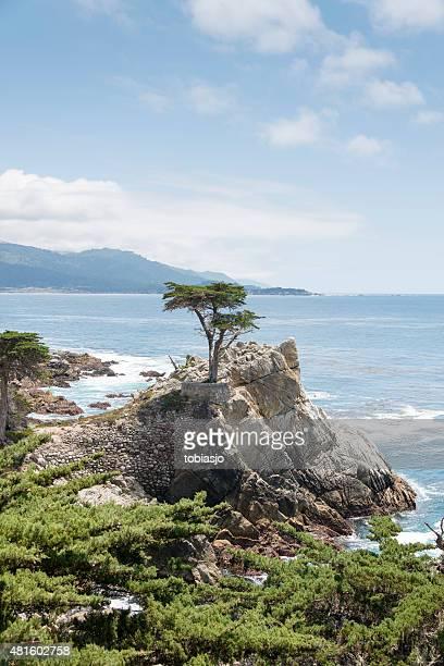 「lone cypress で 17 km のドライブでビッグ sur - マイル ストックフォトと画像