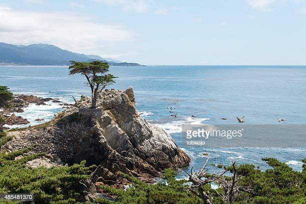 the lone cypress at 17 mile drive in big sur - pebble beach california stock pictures, royalty-free photos & images