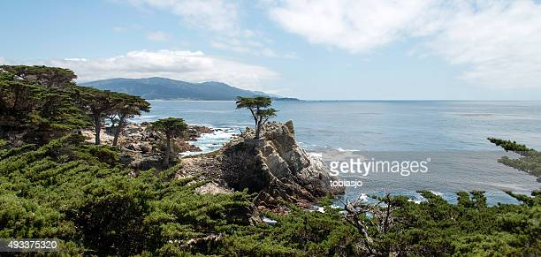 the lone cypress at 17 mile drive in big sur - pebble beach california stockfoto's en -beelden
