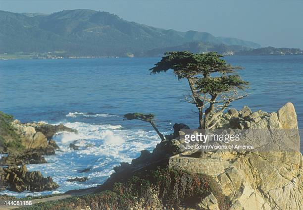 The Lone Cypress at Pebble Beach, California