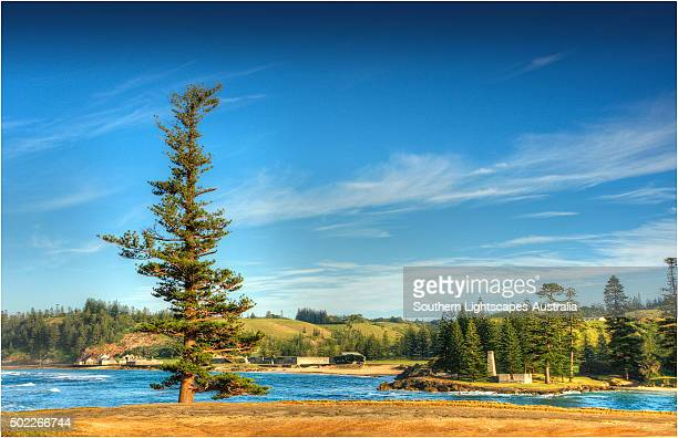 The Lone pine at Point Hunter, Emily Bay, Kingston, Norfolk Island.