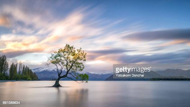 the lone tree in lake wanaka, new zealand - lago wanaka - fotografias e filmes do acervo