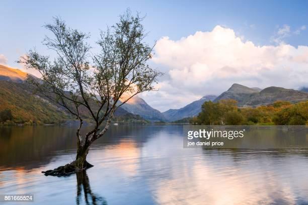The Lone Tree, Llyn Padarn, Snowdonia, Wales
