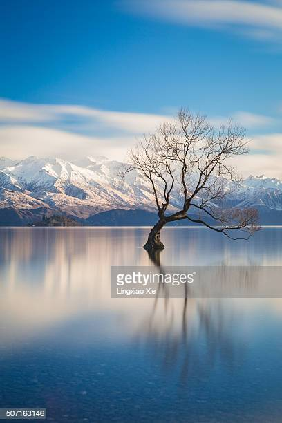 The Lone Tree of Lake Wanaka at Dawn