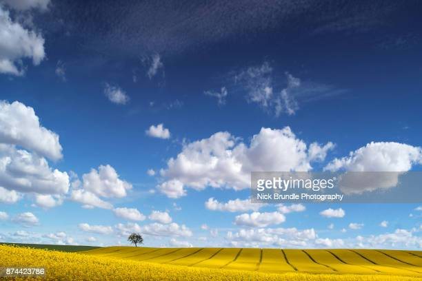 the lone tree - jutland stock photos and pictures