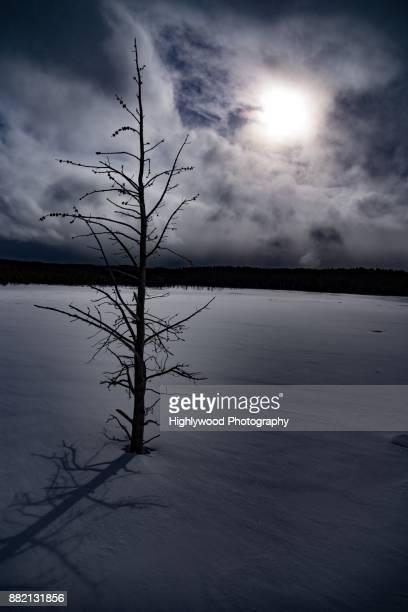 the lone tree under the cold sun - highlywood fotografías e imágenes de stock