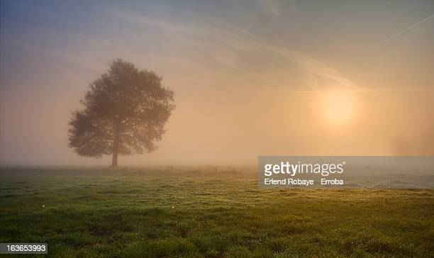 The Lonely Tree - Dreamy misty sunrise