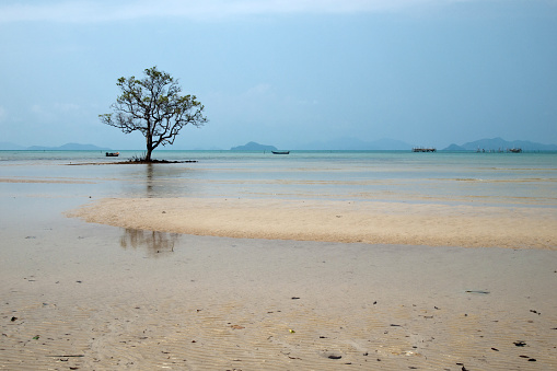 The lonely tree in Koh Mak sea lagoon, tropical bliss, Thailand - gettyimageskorea