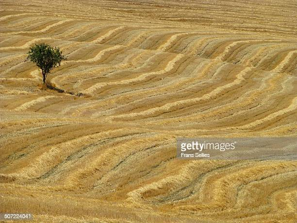 the lonely tree - frans sellies stockfoto's en -beelden