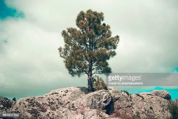 the lonely tree - josemanuelerre fotografías e imágenes de stock
