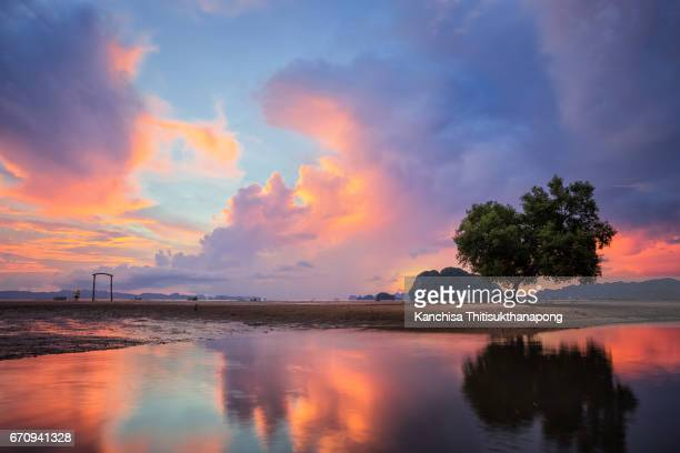 the lonely tree with majestic cloud after sunset - mirage stock photos and pictures