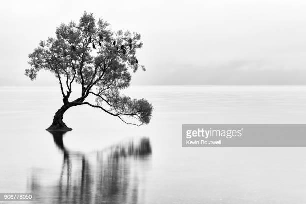 The lonely Wanaka Tree in Lake Wanaka, New Zealand on a foggy morning