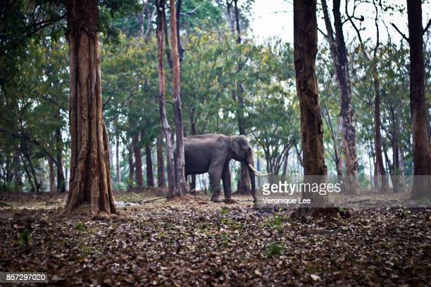 the lonesome male elephant - kerala elephants stock pictures, royalty-free photos & images