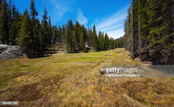 the long and winding meadow - highlywood stock photos and pictures