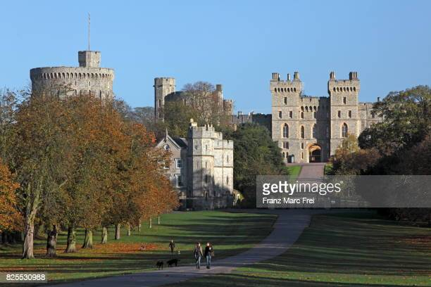 the long walk, windsor great park, windsor castle, berkshire, england - windsor england stock pictures, royalty-free photos & images