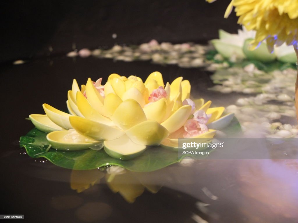 The lotus flower represents one symbol of fortune in buddhism wesak the lotus flower represents one symbol of fortune in news photo mightylinksfo
