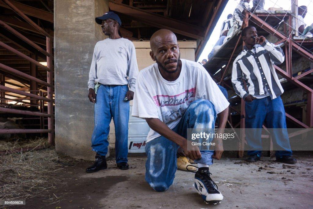 The Louisiana State Penitentiary Rodeo Stadium  A prisoner