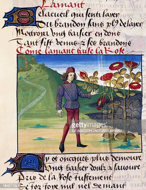 The lover with the rose in his hand miniature from the allegorical poem Romance of the Rose by Guillaume de Lorris and Jean de Meung manuscript 1480...