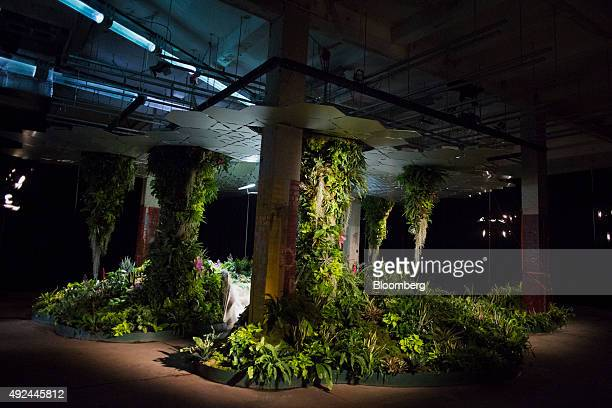 The Lowline Lab is seen in New York US on Monday Oct 12 2015 An underground park in New York City's Lower East Side complete with real flora and...