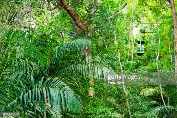 The lush green tropical rainforest in Central America