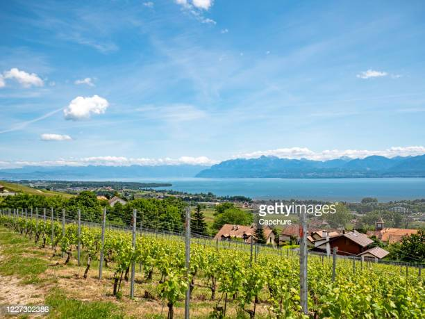 the lush green vineyards, villages and walking trails of the swiss canton of vaud - geneva switzerland stock pictures, royalty-free photos & images