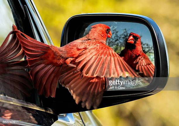 The mad Cardinal
