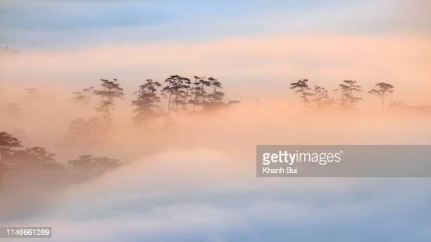 the magic of light and fog