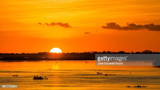 the magic of the pantanal - silhueta stock photos and pictures