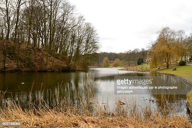 the magical effect in woluwe wood - wood effect stock photos and pictures