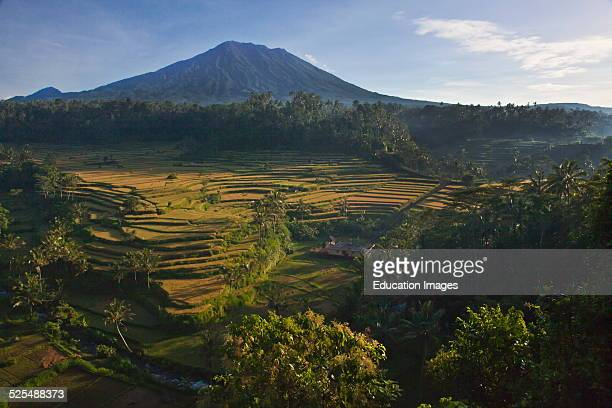 The Mahagiri Rice Fields Grace The Slopes Of Sacred Gunung Agung The Islands Highest Volcanic Peak Bali Indonesia