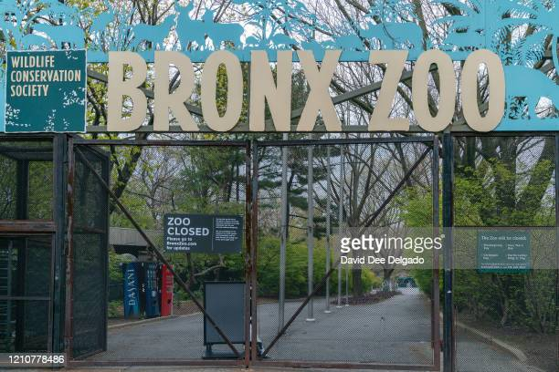 The main entrance of the Bronx Zoo is closed on April 23 in New York City Seven more big cats have reportedly tested positive for the coronavirus...